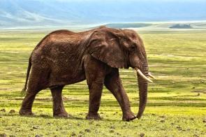 elephant-1421167